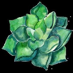 cactus-gowest-a-05