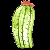 cactus-gowest-a-07