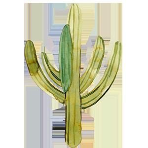 cactus-gowest-a-08